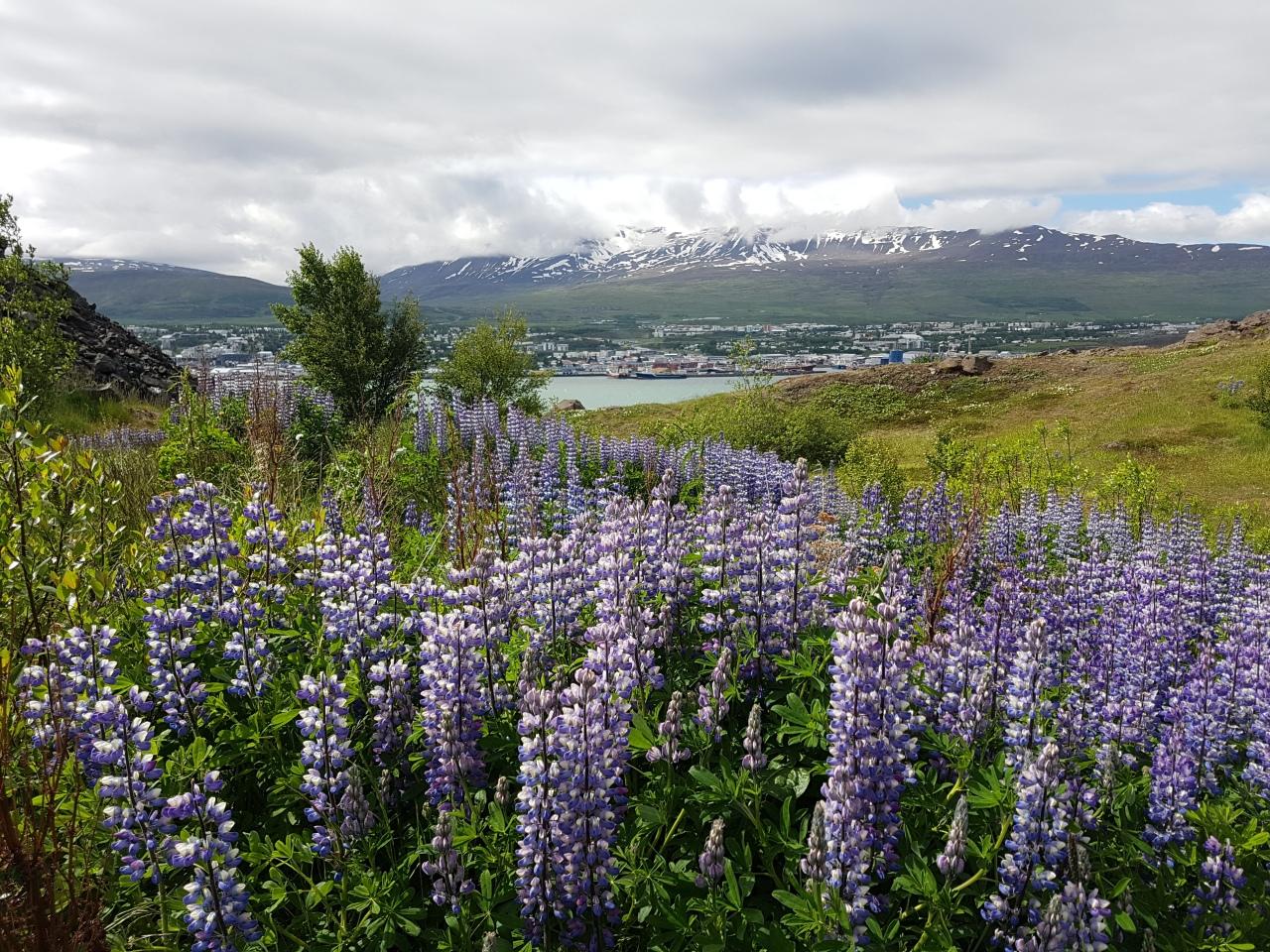6 -)  ISLÂNDIA – road trip – de campervan de Mývatn atéHólmavík